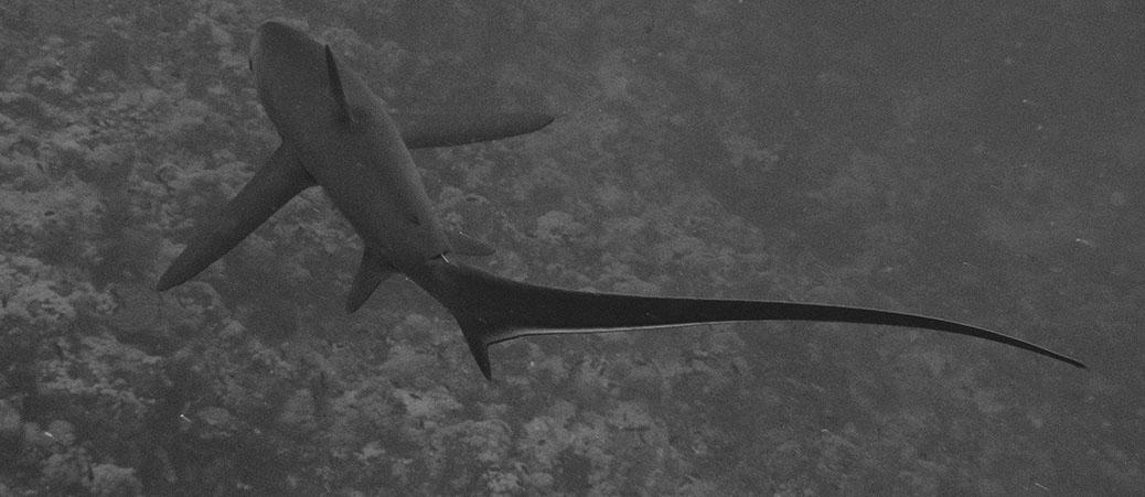 2012 Seawolf Dominator II